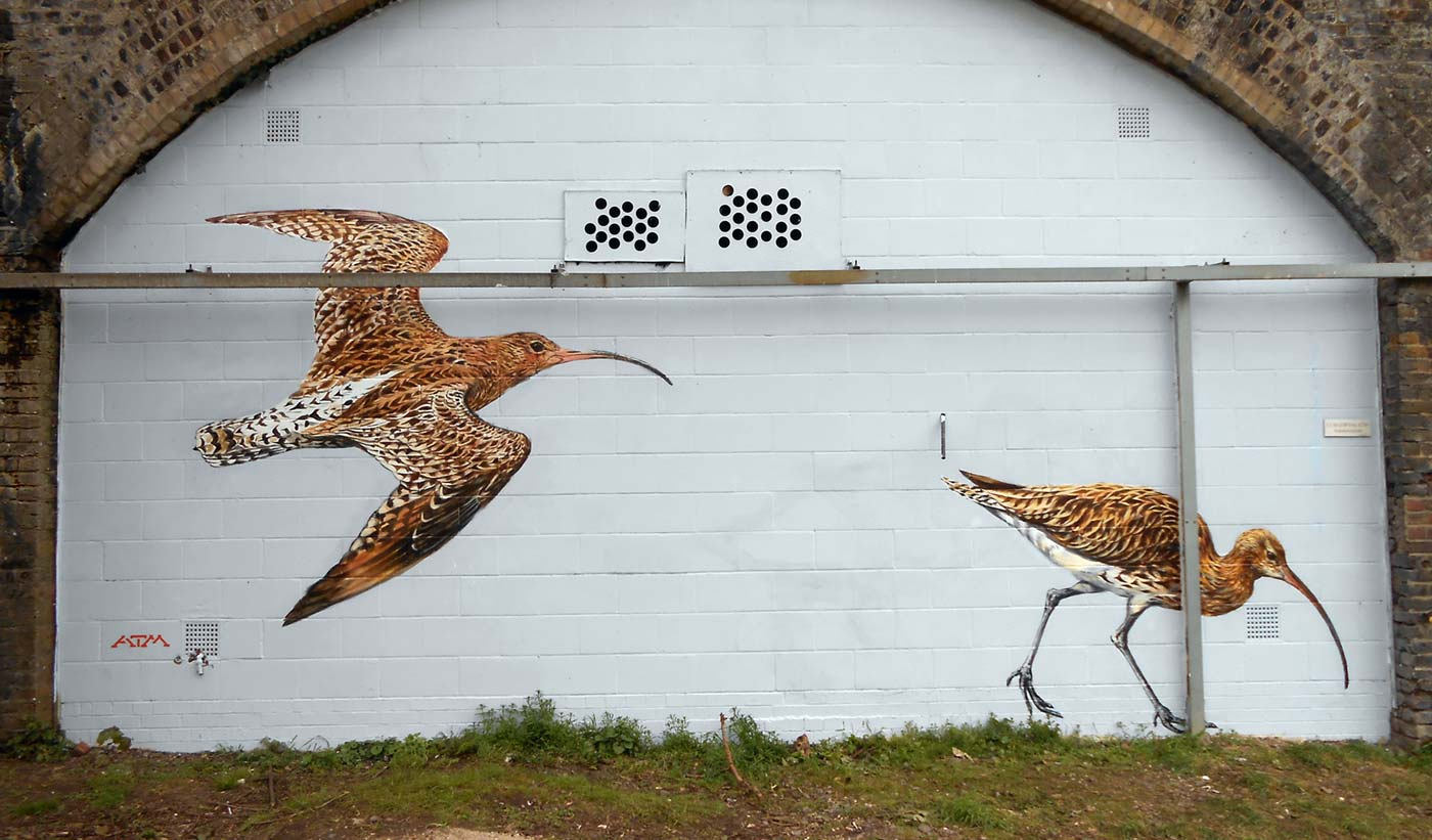 Curlews by ATMstreetart
